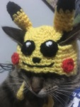 Pikachu Hats for Cats – and sometimes dogs.